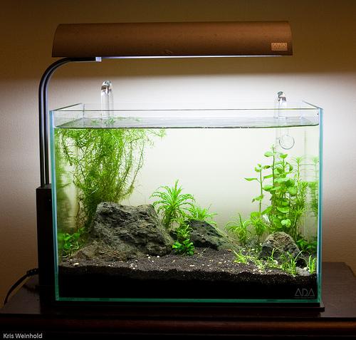 Greater Washington Aquatic Plant Association » Blog ...