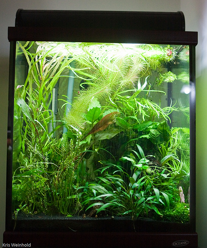 March 2009: Dave's 30G