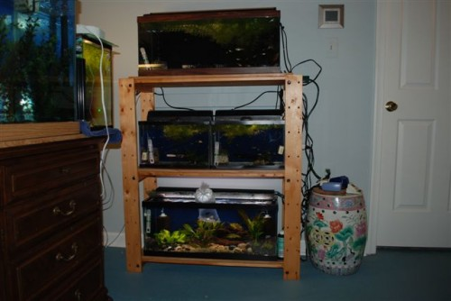 June 2009: Sherry's Aquariums