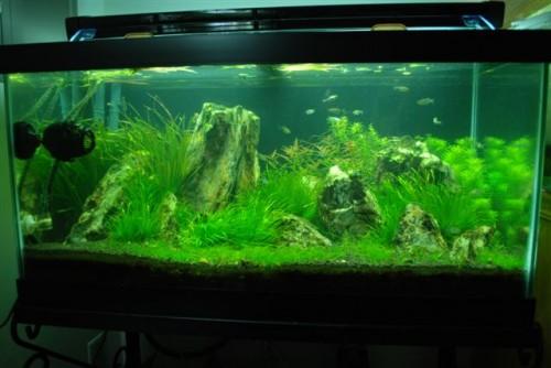 Greater Washington Aquatic Plant Association Blog