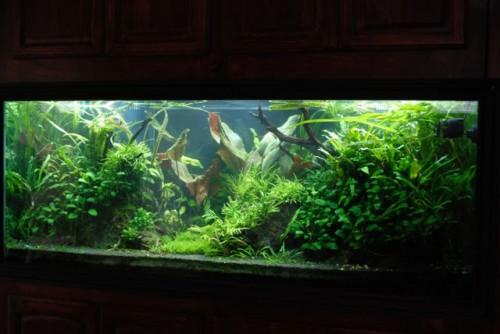 Ghazanfar 210G Aquarium