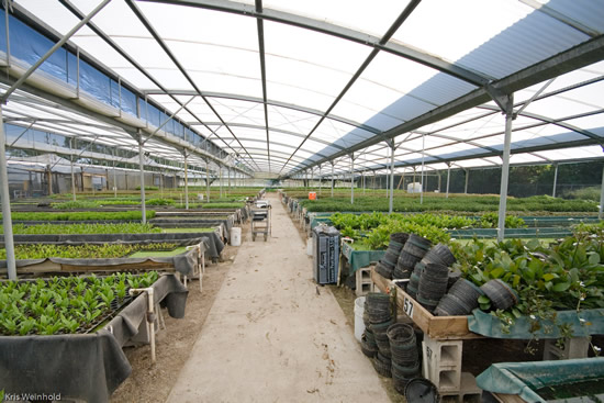 One greenhouse at Flordia Aquatic Nurseries