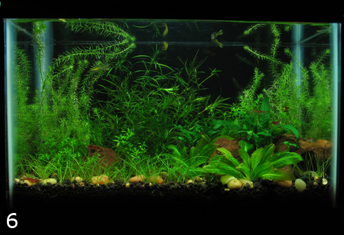 aquascaping for beginners 28 images guide to making